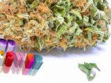CBD Hemp Flowers Three Myths - CBD Cannabis News