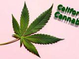 California cannabis news - CBD News