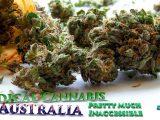 Medical Cannabis in Australia Pretty Much Inaccessible DrGanja News, Cannabis oil, CBD Oil, CBD Flowers,