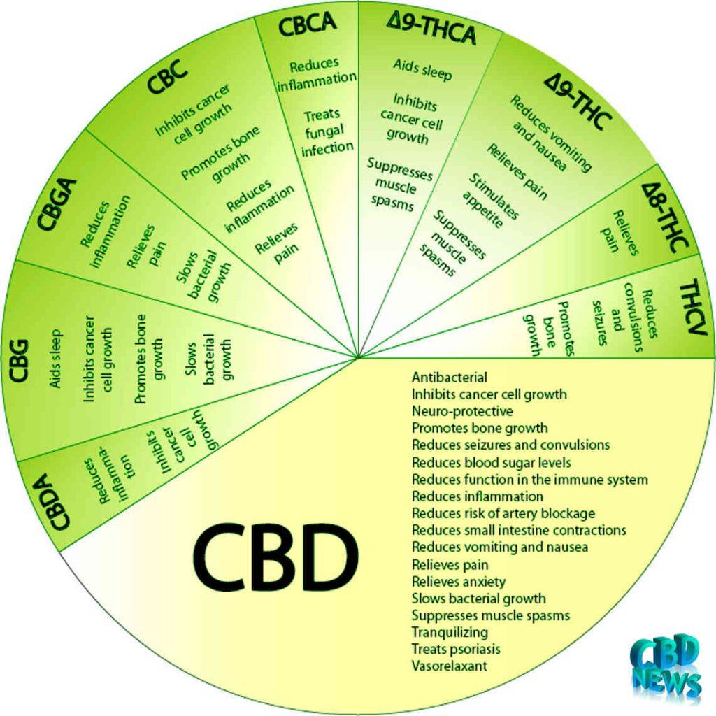 CBD Flowers Health Benefits CBD Cannabis News