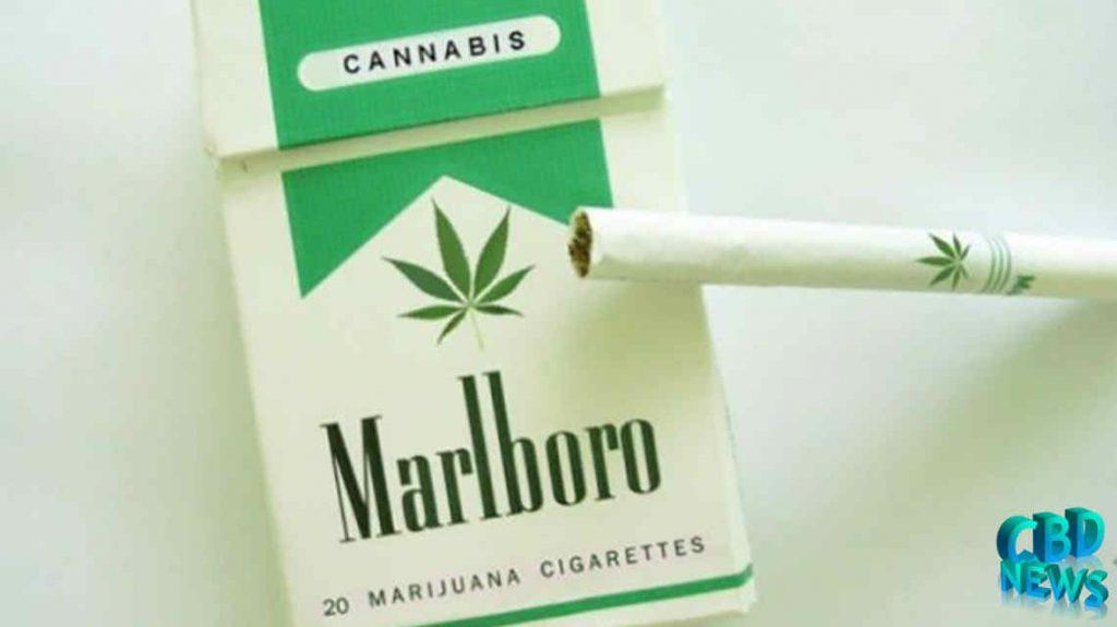 Marlboro Cannabis Business CBD News