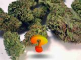 CBD Hemp Flower FAQ CBD Cannabis News